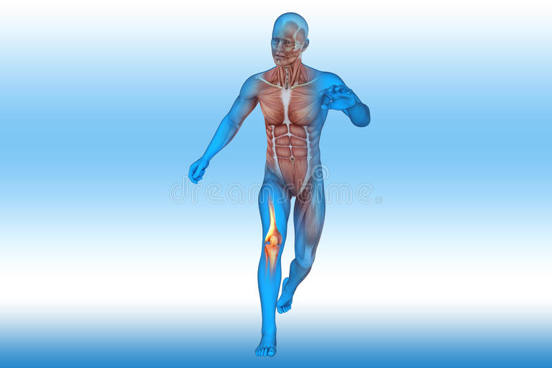 膝盖,解剖学,骨头 向量例证