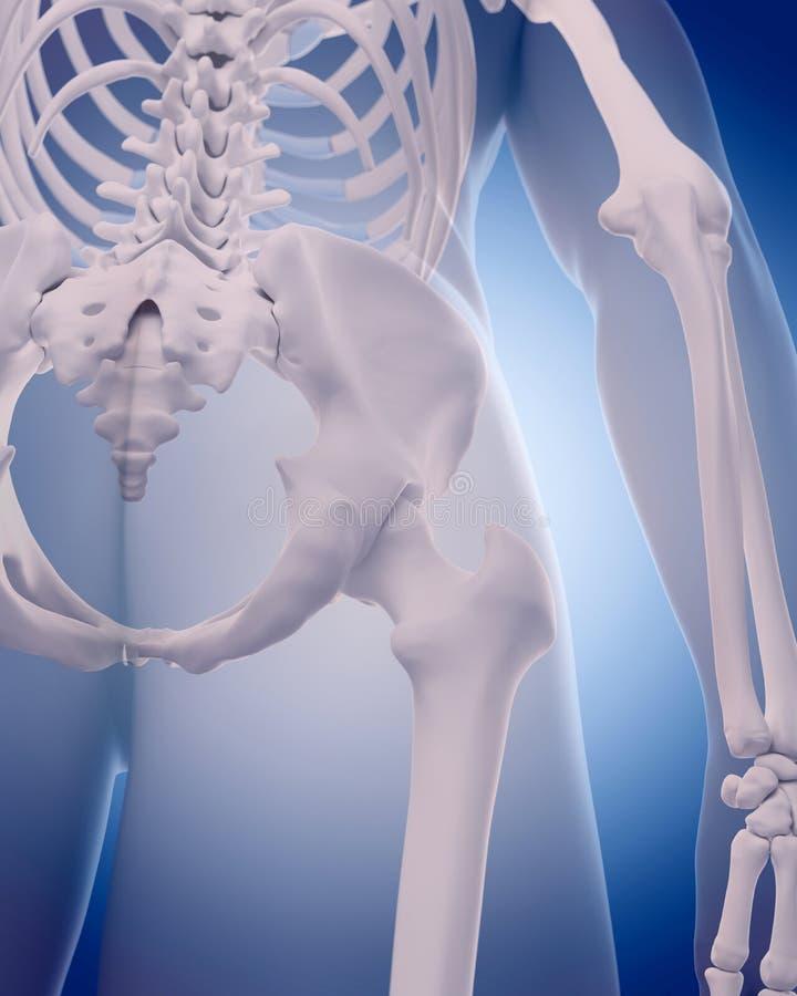 臀部的骨头 皇族释放例证