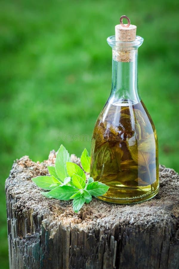 自创利口酒由酒精和大蒜制成 免版税库存图片