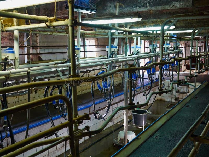自动化挤奶设备挤奶厅 免版税库存照片
