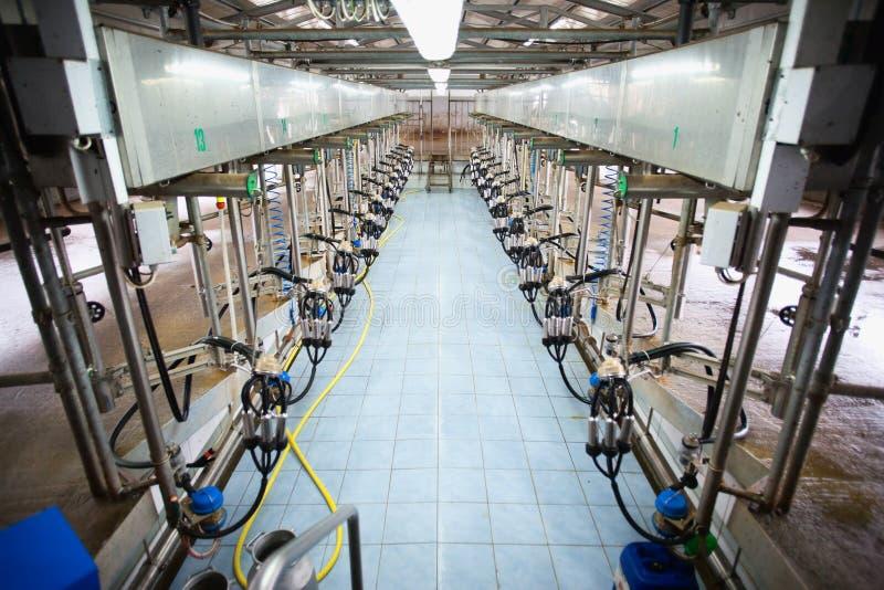 自动挤奶的系统 免版税图库摄影