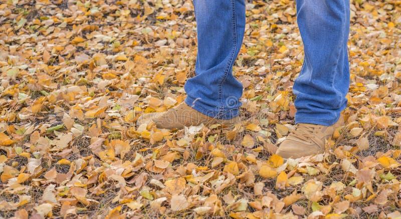 自己的在牛仔裤的脚Selfie,在一个对皮革橙色起动,在一束下落的黄色叶子 库存图片