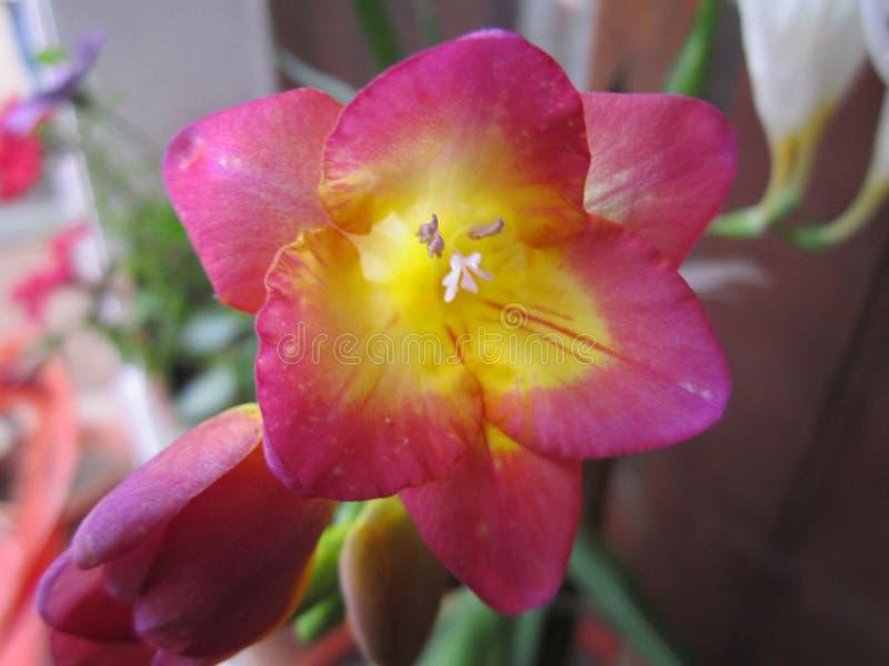 自然、花和植物 图库摄影