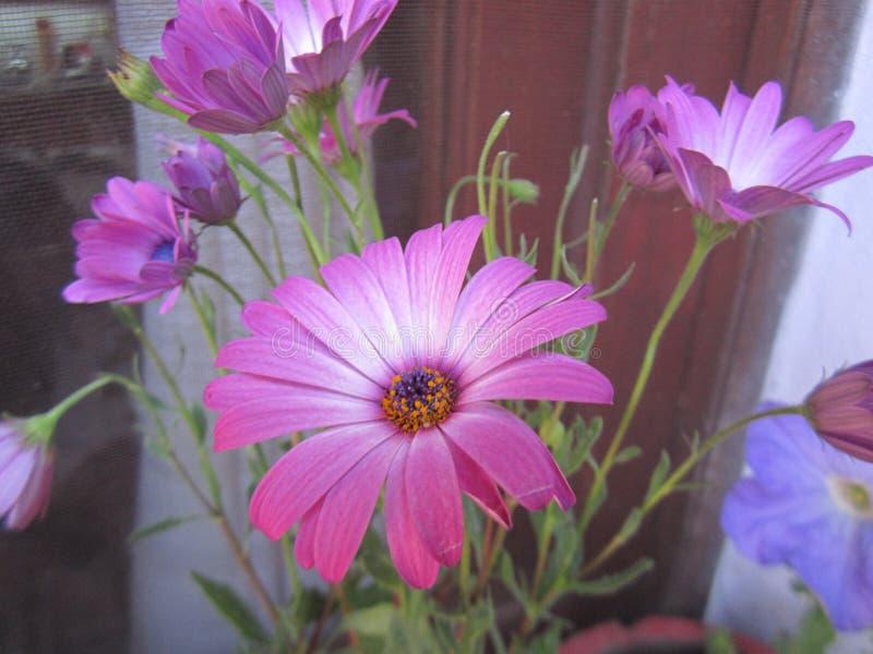 自然、花和植物 免版税库存图片