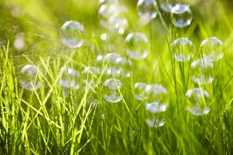 自然。背景。与肥皂泡的草。 免版税图库摄影