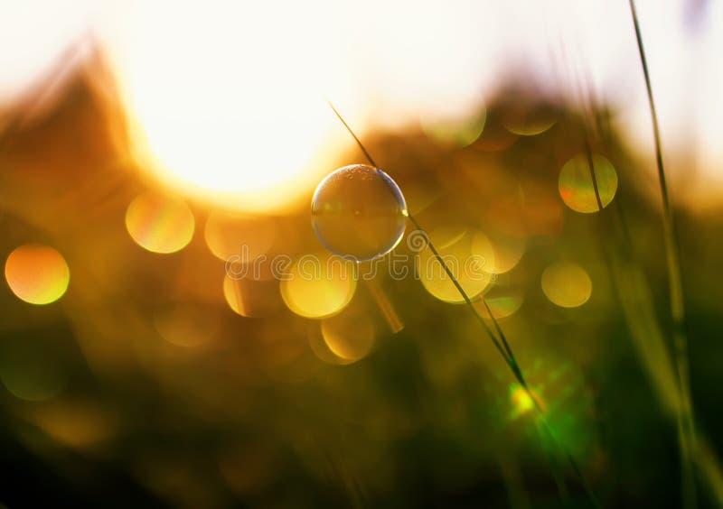 自然与夏天明白绿色草甸和肥皂泡明亮地淡光并且说谎在橙色日落背景 免版税库存图片