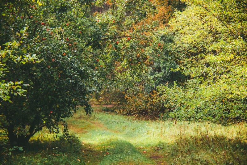 自然与苹果树的秋天背景 免版税库存图片