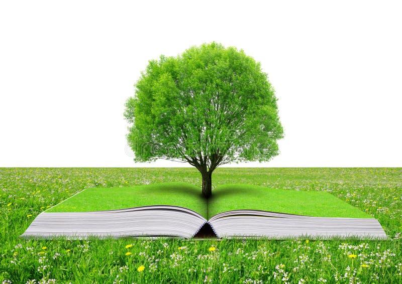 自然书与树的 库存照片
