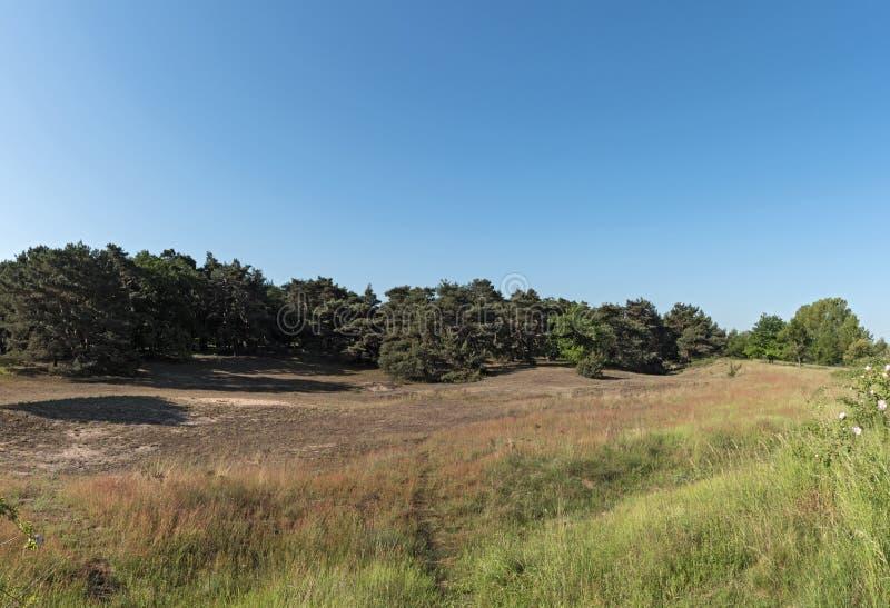 自然保护区Schwanheimer沙丘在法兰克福,黑森,德国 免版税库存照片