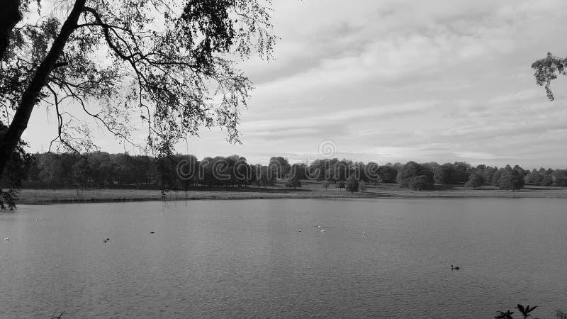 自然保护的湖与在距离的树 免版税库存图片