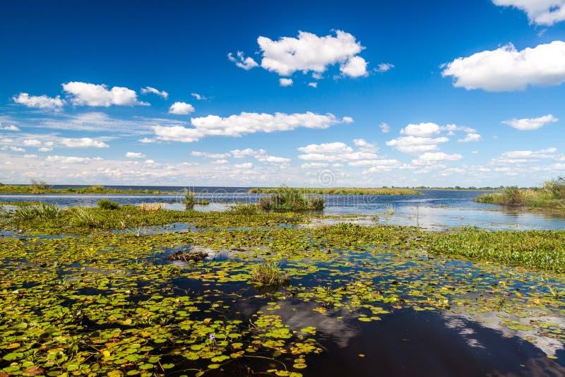 自然保护的Esteros del Ibera沼泽地 免版税库存图片