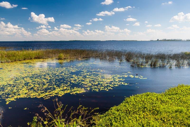 自然保护的Esteros del Ibera沼泽地 免版税库存照片