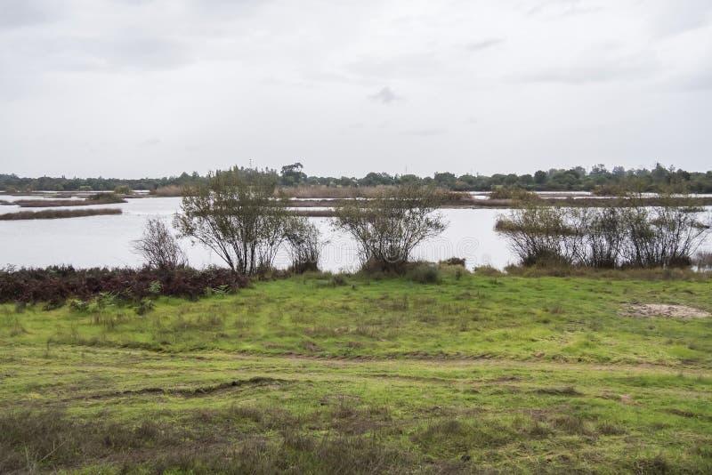 自然储备和国家公园Donana,安大路西亚,西班牙 库存图片