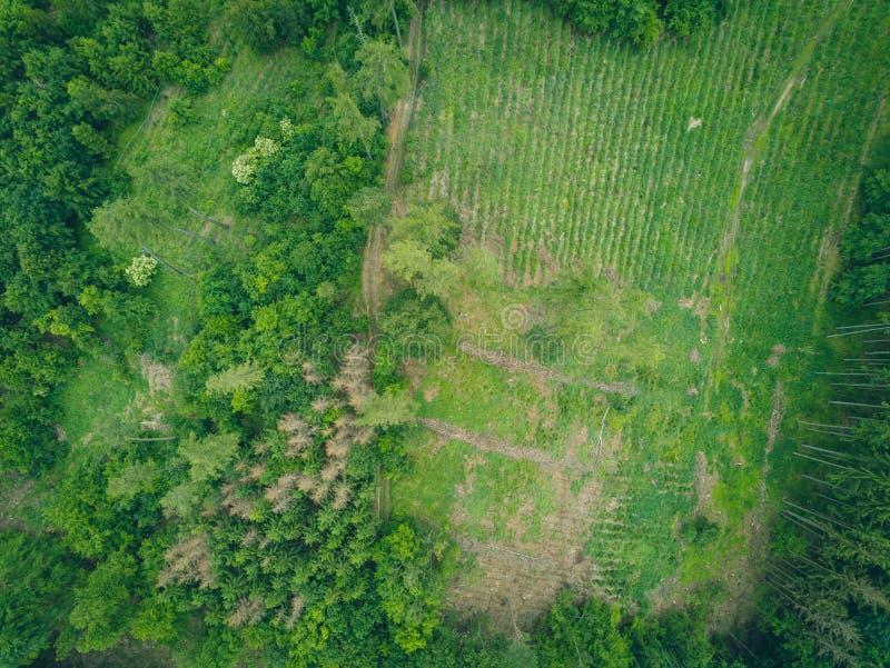 自然公园风景在从上面布尔诺,捷克 免版税库存照片