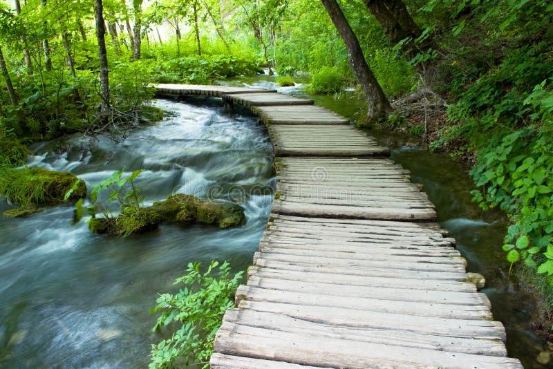 自然公园 免版税库存图片