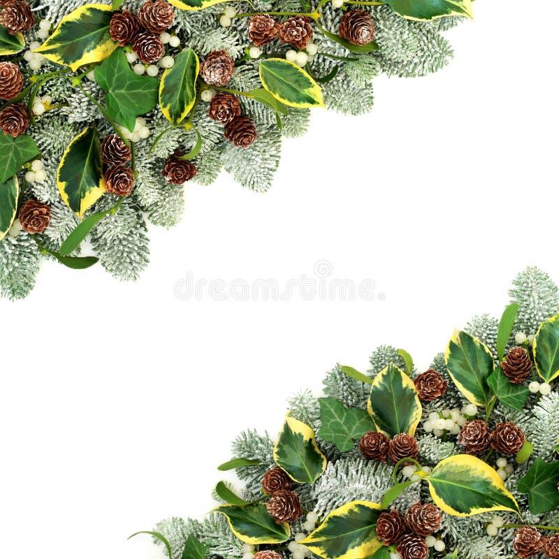 自然冬天植物群边界 免版税库存图片
