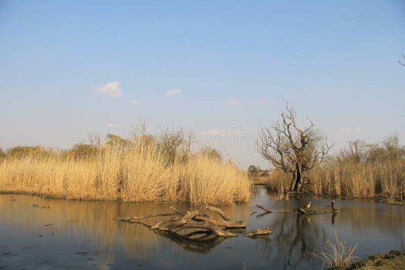自然冬天-河,水坝 免版税库存图片