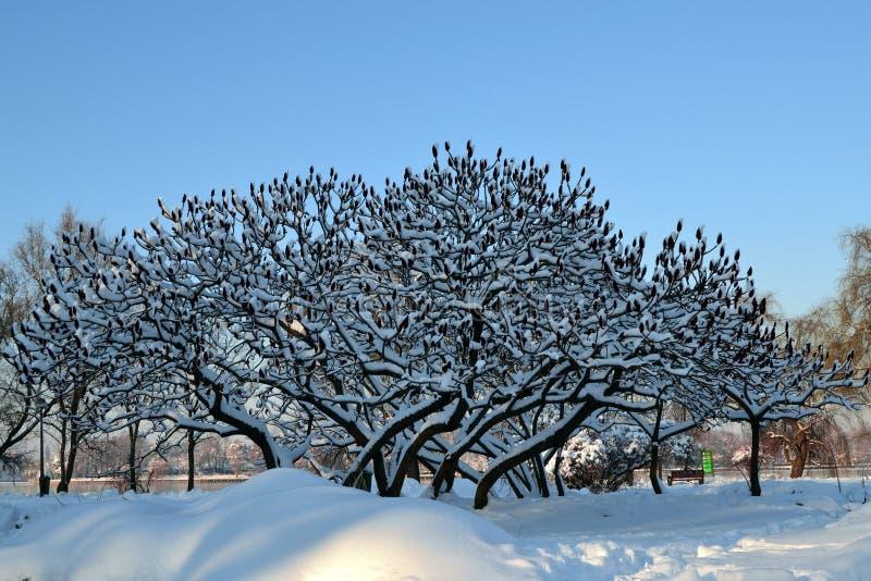 自然冬天 库存照片