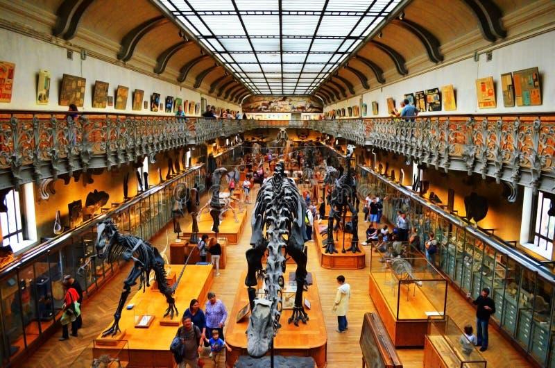 自然博物馆在巴黎 免版税库存图片