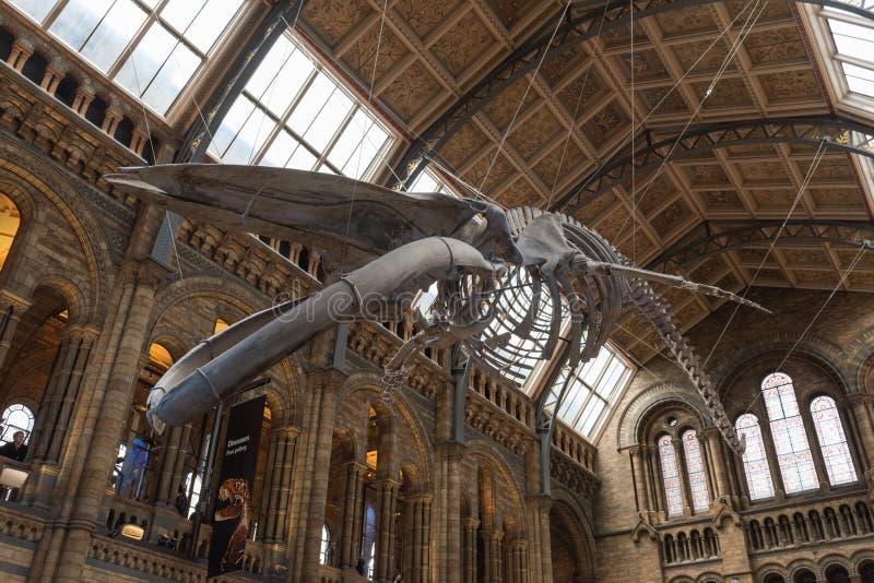 自然历史博物馆-伦敦 免版税库存图片