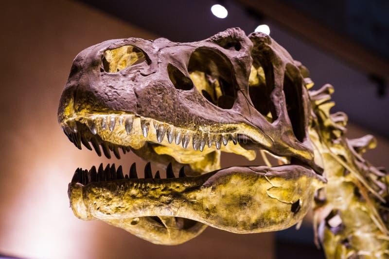自然历史和人类历史Kitakyuhsu博物馆  免版税库存照片