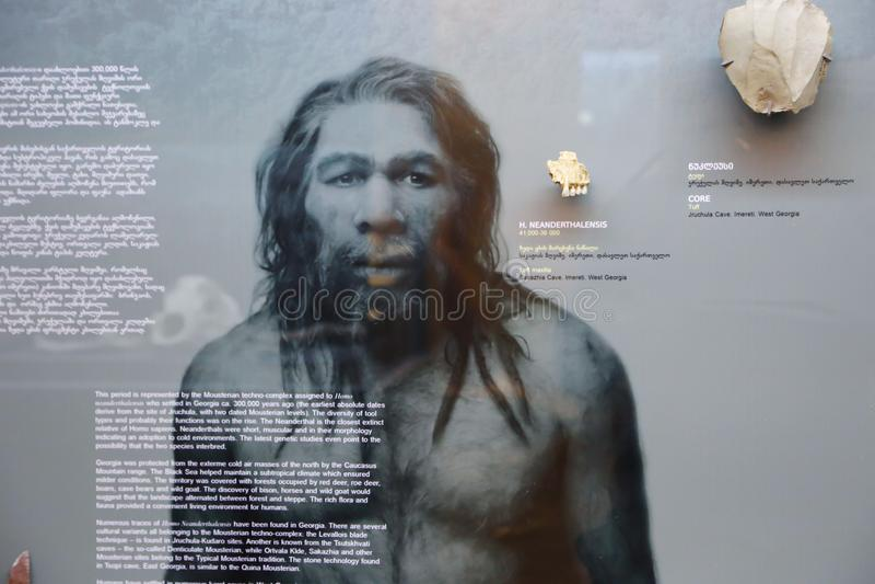 自然历史的原始人在英王乔治一世至三世时期国家博物馆-第比利斯 库存图片