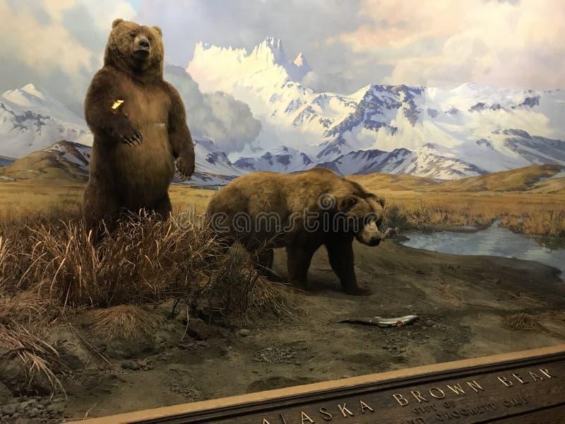 自然历史纽约博物馆  库存照片