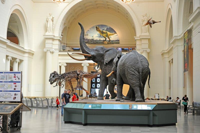 自然历史领域博物馆的芝加哥 库存照片
