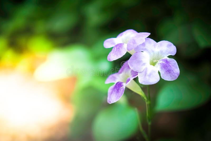 自然和环境美好与紫色花在绿色庭院里 免版税库存照片