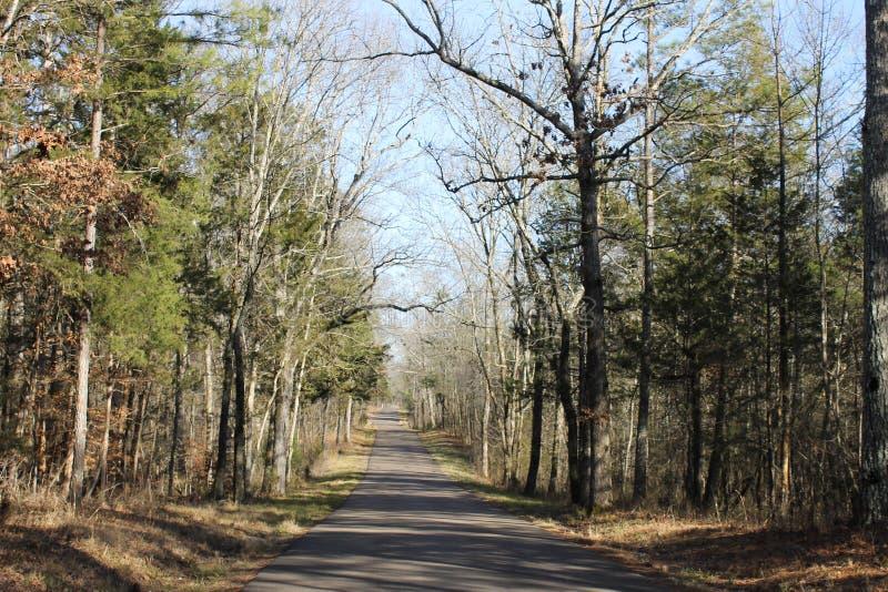 自然和美丽的路在森林在一个晴天 库存图片