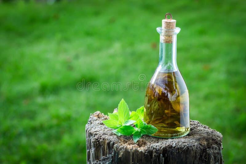 自然和自创利口酒由薄菏和酒精制成 免版税库存照片