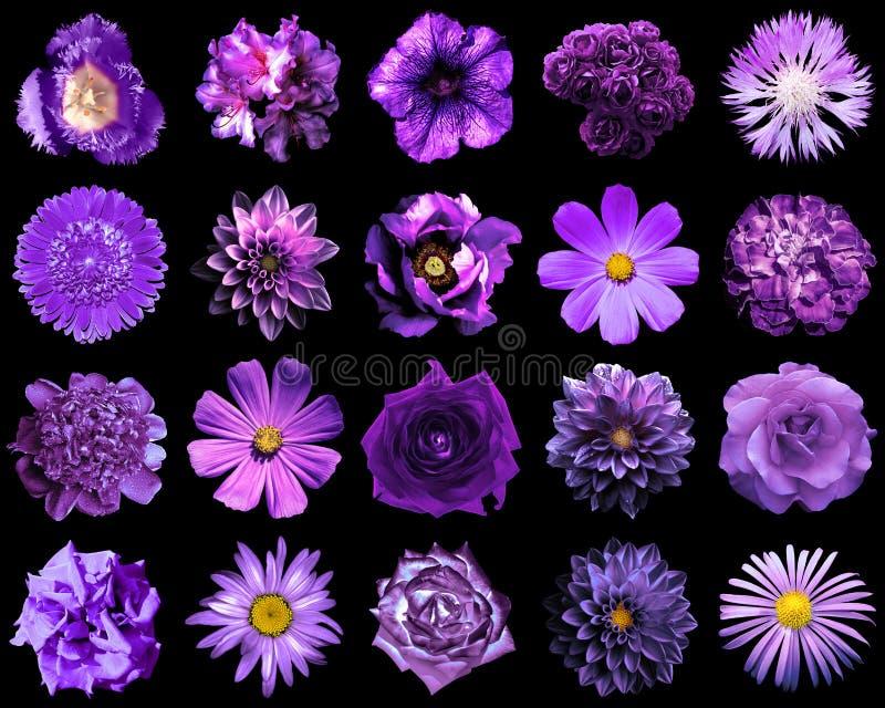 自然和超现实的紫罗兰拼贴画开花20在1 免版税图库摄影
