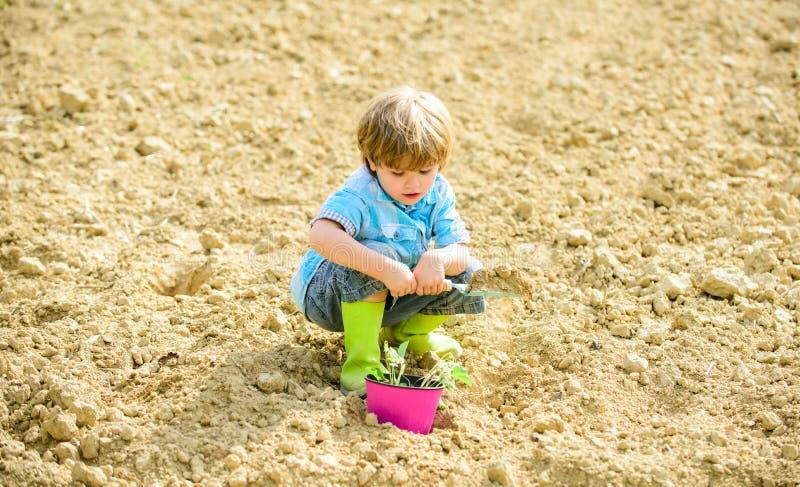 自然土壤 在种田的新技术 r r o 植物的工作者 工作与 免版税库存图片