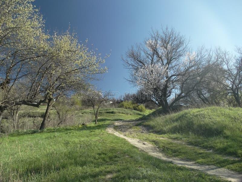 自然在冬天以后醒 图库摄影