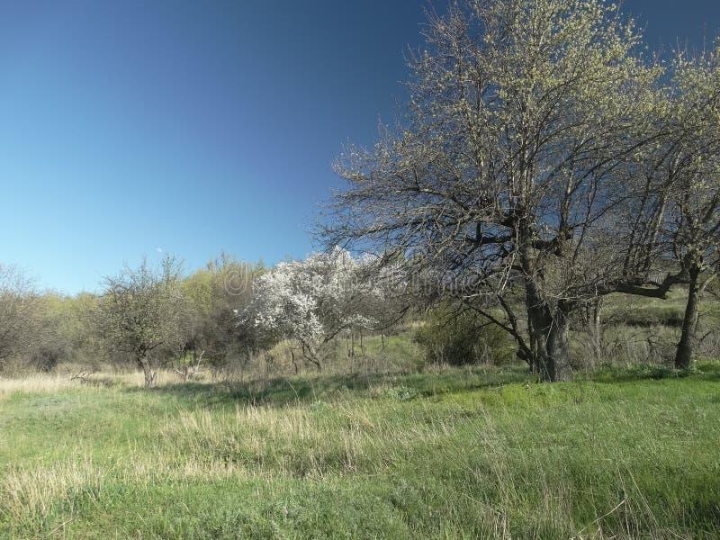 自然在冬天以后醒 库存图片