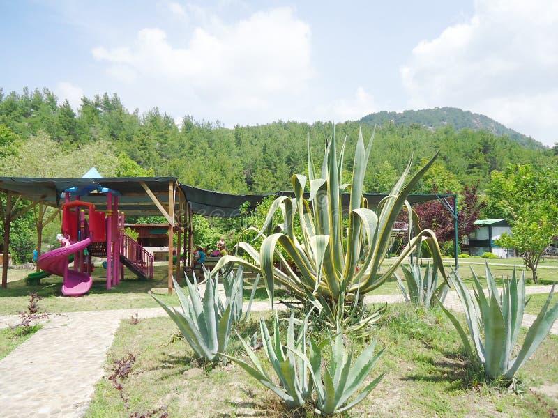 自然在安塔利亚 免版税库存照片