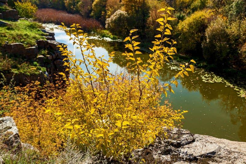 自然在山毛榉峡谷的秋天,乌克兰 有趣的地方和旅行在乌克兰 山Tikich河注入 免版税库存图片