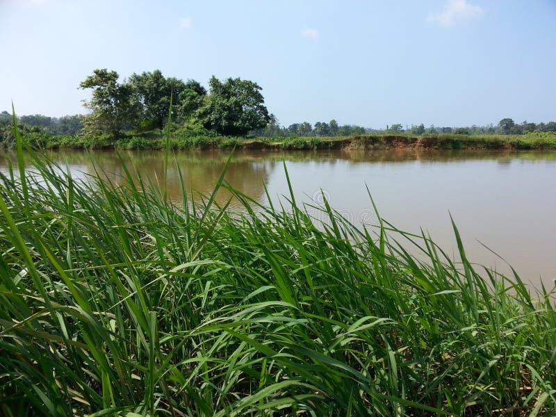 自然在斯里兰卡的河的附近村庄草 图库摄影