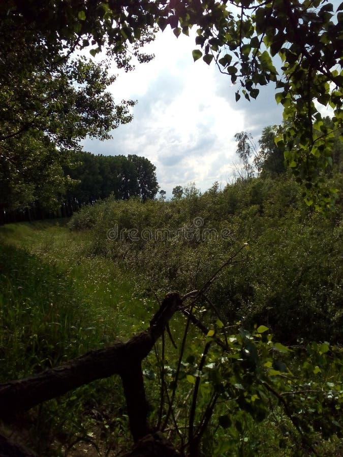 自然在森林里 免版税图库摄影