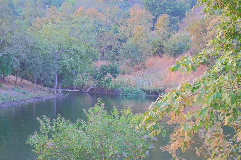 自然在森林, mahi回水, banswara,拉贾斯坦,印度里 库存图片