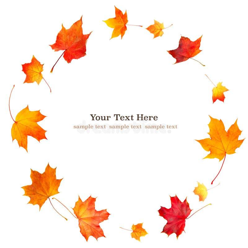 自然在网横幅的白色背景隔绝的秋天橙色叶子旋转圈子与您的文本的拷贝空间 免版税库存照片