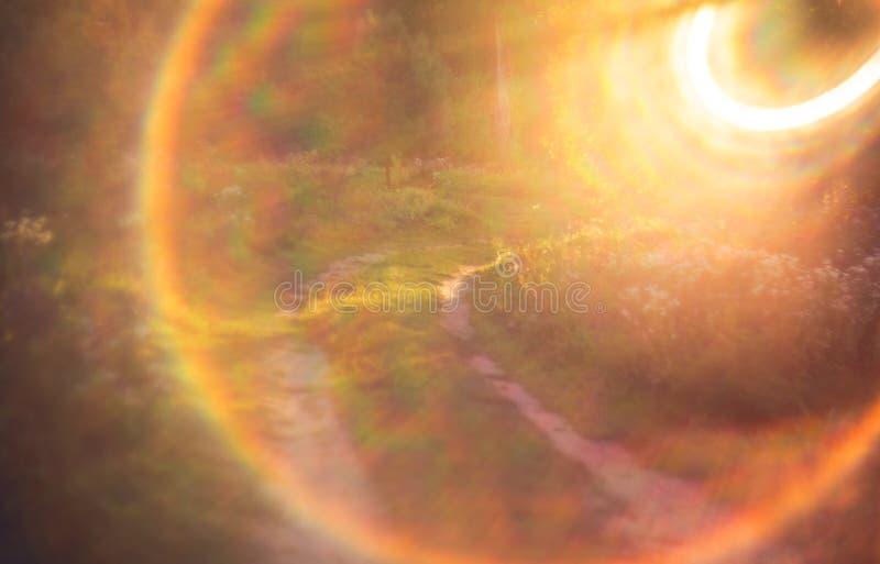 自然夏天太阳亮光 库存图片