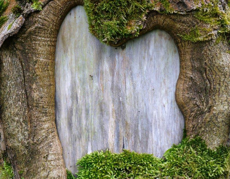自然大胆的木制框架背景 免版税图库摄影