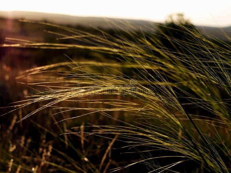 自然大草原荒地秀丽视图  库存照片