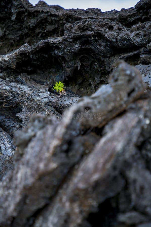 自然奇迹夏威夷 免版税库存图片