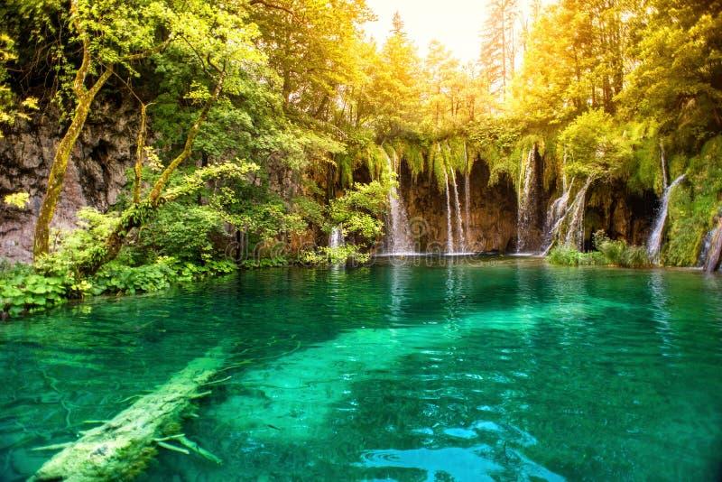 自然妙境,湖瀑布在国家公园在与阳光的一个晴朗的夏日 瀑布在深森林, plitvice里 库存图片