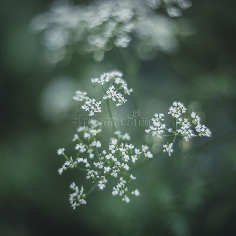 自然小植物宏指令背景 免版税库存照片