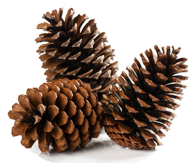自然干燥杉木锥体 库存照片