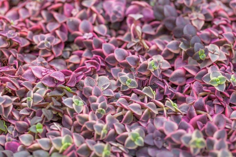 自然开花植物地毯,与小叶子的草 图库摄影