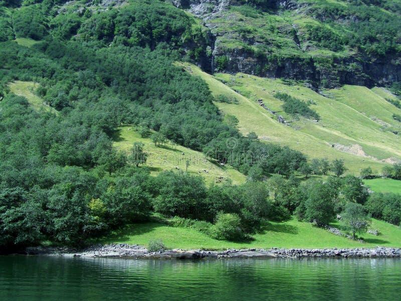 自然挪威夏天 水,森林海湾在一好日子 库存图片